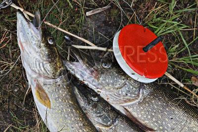запрет на рыбалку в республике коми