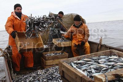 ловля рыбы вакансии спб