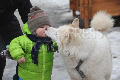 4039543 / Ребенок и собака. 3-я образовательно-реабилитационная программа `По пути с хаски` для детей с ограниченными возможностями здоровья (ОВЗ). На снимке: ребенок и собака.