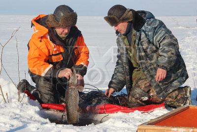 в рыболовную бригаду требуется