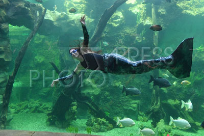 4168817 / Океанариум. Открытие `Крокус Сити Океанариума`. Девушка в костюме русалки.