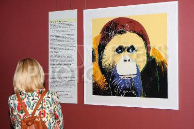 4197305 / Выставка `Энди Уорхол. Вымирающие виды`. Дарвиновский музей. Открытие выставки `Энди Уорхол. Вымирающие виды`.