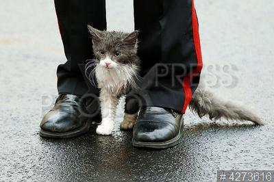 4273616 / Суворовец и котенок. Церемония открытия городка Санкт-Петербургского суворовского училища. Традиция первым в новый дом запускать кота.