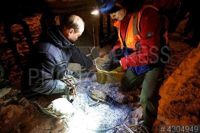 4304949 / Спасатели животных. Служба спасения животных `Кошкиспас` при поисково-спасательном отряде `Экстремум` занимается спасением животных, попавших в беду. Вызволение чайки из `ледяного плена` на канале Грибоедова.