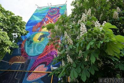 4379363 / Граффити. Профсоюзная улица, 87/49. Граффити мексиканского художника Фарида Руэда на торце жилого дома. Цветущий каштан.