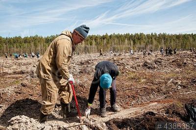 4386387 / Посадка леса. Региональная акция `День посадки леса`, приуроченная к Году волонтера в России.
