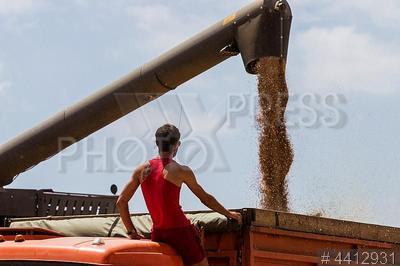 4412931 / Уборка урожая зерновых. Уборка урожая зерновых. Грузовик и уборочный комбайн в поле.
