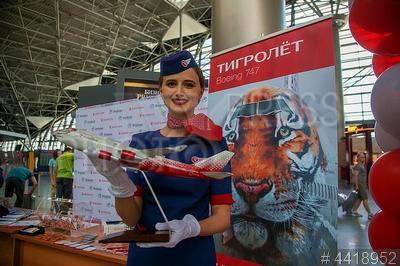 4418952 / Бортпроводница. Аэропорт `Внуково`. Презентация самолета `Тигролет`. Бортпроводница авиакомпании `Россия` с моделью самолета Boeing 747.
