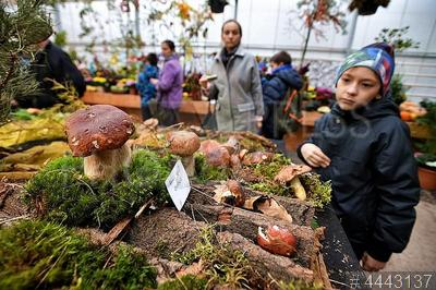 4443137 / Грибной фестиваль. Ботанический сад МГУ `Аптекарский огород`. III Ежегодный грибной фестиваль.