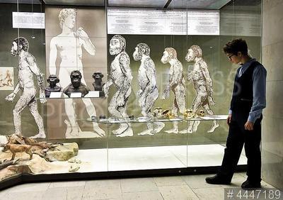 4447189 / Дарвиновский музей. Дарвиновский музей. Школьник рассматривает экспонаты.