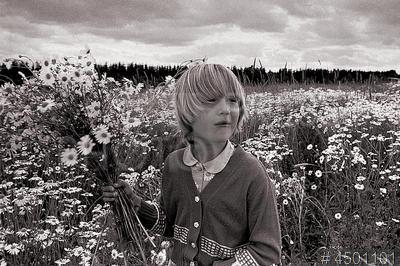 4501101 / Девочка с ромашками. Из серии `По дорогам России`. Ромашковые луга под Осташковым. Девочка собирает цветы.