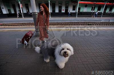 5860062 / Пассажиры на вокзале. Женщина с собакой и чемоданом на платформе вокзала.