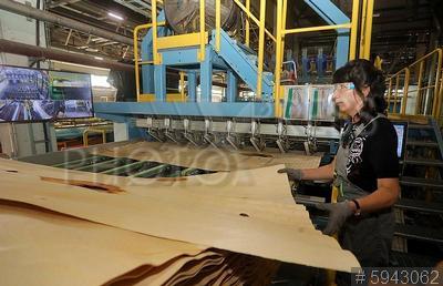 5943062 / Фанерный завод. Фанерный завод UPM Plywood. Запуск новой линии производства фанеры. Шпон.