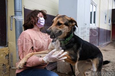 6193820 / Собачий приют. Пандемия коронавируса COVID-19. Обязательный масочный режим. Приют для бездомных кошек и собак. Волонтер в медицинской маске навещает бездомных собак.