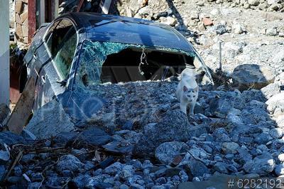 6282192 / Поврежденный автомобиль. Последствия ливней в Ялте. Поврежденный камнями автомобиль и кошка.