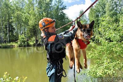 6288002 / Кинологическая служба МЧС. 46 Кинологический центр 179-го спасательного центра МЧС РФ. Переправа собаки через водную преграду.